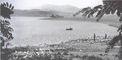 Liqeni i Kurjanit